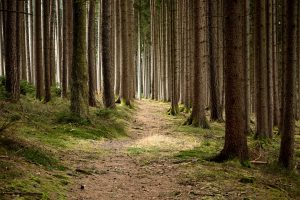 forestry-679173_1920